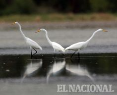 Laguna de Unare, Edo Anzoátegui #Paisajes #Rincones #Venezuela Reportero Gráfico - José Rodríguez