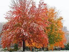 """¿De qué depende el cambio de color de las hojas en otoño?  Cuando se trata de los colores de otoño, la gama varía dependiendo del lugar. Según el meteorólogo Mike Pigott, el factor que más afecta a las tonalidades es la luz menguante.     """"Las tonalidades ocre es el resultado del descenso de luz diurna que debilita la fotosíntesis. En el norte, los días son más cortos que en el sur. Por ese motivo las hojas tardan más en cambiar de color en el sur."""""""