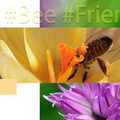 👉Czy znacie i lubicie internetowe challenge?😲 Kojarzycie akcje, jak Movember czy ALS Ice Bucket Challenge, które angażowały miliony i budowały świadomość problemów zdrowotnych czy społecznych? Teraz mamy dla Was propozycję zaangażowania się w pomoc ginącym pszczołom.🐝 W skrócie chodzi o to, aby w swoim ogrodzie, na tarasie lub balkonie zasadzić roślinę przyjazną pszczołom, zrobić zdjęcie albo film i opublikować go w swoich mediach społecznościowych z hashtagami #bee #friendly #plant.. Bee, Vegetables, Film, Movie, Honey Bees, Film Stock, Bees, Vegetable Recipes, Cinema