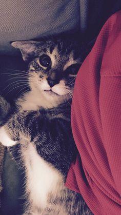 My new baby kitten Winston