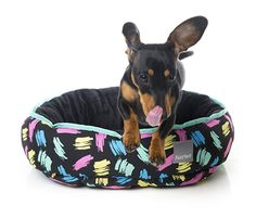 Channel your inner Kelly or Zack with new modern dog beds from FuzzYard.