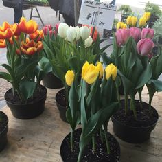 Photo of Union Square Greenmarket - New York, NY, United States. Flowers make me happy!!!!