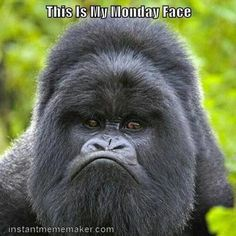 Mountain Gorilla ~j (My favourite great ape as a child) Primates, Mammals, Animals And Pets, Funny Animals, Cute Animals, Angry Animals, Smiling Animals, Wild Animals, Monday Face