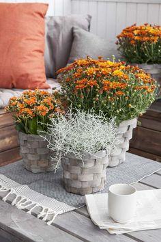 Får å skape den rette stemningen trenger du interiør og tilbehør som passer sammen med blomstene dine. Hos oss finner du lekker pynt som passer både ute og inne, og som gir en koselig høststemning.