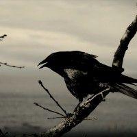Nature ‹ Paula Wallis Photography