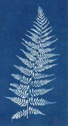 Cyanotypes on Fabric blueprints! A blueprint on how to produce ..