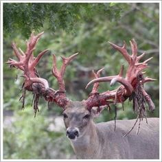 1000 Images About Shed Hunting On Pinterest Sheds