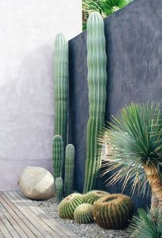 ▷ 1001 + fantastic decor ideas with outdoor succulents - Giant cactus near a modern wall, ball cactus, decorative gravel, stone - Decorative Gravel, Decoration Plante, Cactus Y Suculentas, Garden Care, Garden Tips, Garden Ideas, Cactus Flower, Cactus Cactus, Cactus Decor