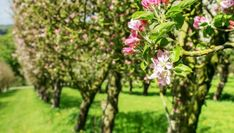 Podar árboles frutales - Bricomanía Organic Horticulture, Small Garden Design, Dream Garden, Herb Garden, Patio, Fruit, Magnolias, Gardening, Interior