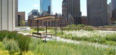 NPS Roof Garden