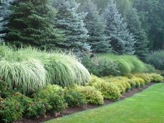 Large conifer trees fronted by large ornamental grasses and medium shrubs and perennials work together to effectively and beautifully screen and provide privacy on this property--by Landscape Design Associates of Westchester, Inc.
