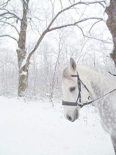 hooves falling in snow