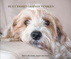Fotoboek petit basset griffon vendeen, door Martin Cordes. 60 pagina's full color, in een soft cover omslag