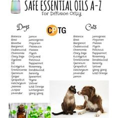 Multiple essential oils have actually shown to be very efficient for stress-re. Dog Safe Essential Oils, Essential Oils For Headaches, Essential Oil Diffuser Blends, Doterra Essential Oils, Young Living Essential Oils, Oil Safe, Oils For Dogs, Young Living Oils, Stress Relief