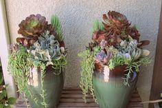 Tall succulent green and brown pots. LaurasLittleGardens.com