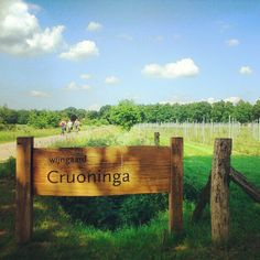 Winemakers Cruoninga in Westerwolde, Groningen, The Netherlands