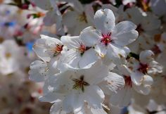 Blossom Mad