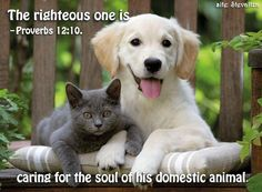 """Merciful Treatment of Animals. Proverbs 12:10 says: """"The righteous one is caring for the soul of his domestic animal, but the mercies of the wicked ones are cruel."""". . . The righteous person's concern for his animals finds precedent in God's own care for them as part of his creation.—Compare Ex 20:10; De 25:4; 22:4, 6, 7; 11:15; Ps 104:14, 27; Jon 4:11. http://wol.jw.org/en/wol/d/r1/lp-e/1200002994#h=20:0-20:769"""