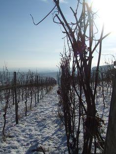 Bliensch dans la neige (2009)