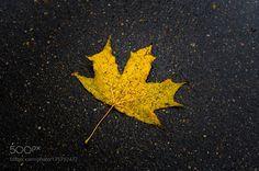 A wet leaf by YuryVinokurov