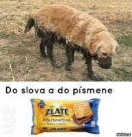 VTÍPKY | Mimibazar.cz Text Message Meme, Funny Images, Funny Pictures, Funny Animals, Cute Animals, Funny Moments, Best Memes, I Laughed, Haha