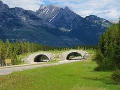 Banff National Park/ wildlife overpass