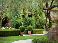 Hedges, path and the window.