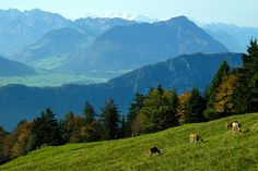 Mount Rigi, Weggis Lucerne Switzerland