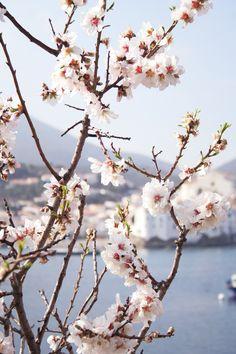 #Mandorlo #Almond Tree