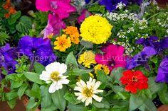 Collin County Master Gardeners' McKinney Garden Show, Part 1 | Living Art