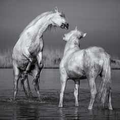 Horse Play by Paul Keates on 500px.