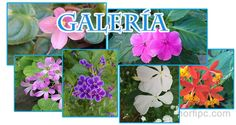 Galería de fotografías de flores tropicales
