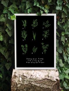 Kitchen Art Print Herbs 11x15 Botanical Chart by anek on Etsy, $45.00