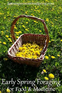 Take the harvest basket out to enjoy the outdoors and early spring foraging for food and medicine to fill the pantry and medicine cabinet.