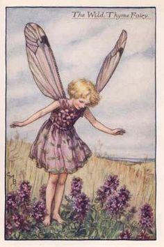 FLOWER FAIRIES 1940's: Wild Thyme Fairy. Vintage Print. Artist: Cicely Barker