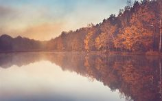 Download wallpapers autumn, lake, fog, morning, yellow forest, autumn landscape