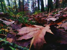 Autumn photography ❤