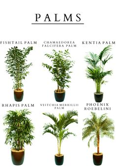Rental plants for decor