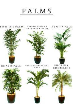 Rental plants for decor Indoor Cactus, Indoor Garden, Indoor Plants, Home And Garden, Container Gardening, Gardening Tips, Kentia Palm, Christmas Plants, Landscaping