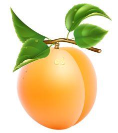 Apricot Transparent PNG Clipart Picture