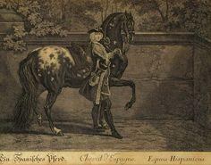 LE Spotted Horse dans l'Histoire / Dossier Complémentaire / Le Spannish Jennet