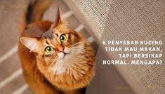 6 Penyebab Kucing Tidak Mau Makan, Tapi Bersikap Normal. Mengapa?