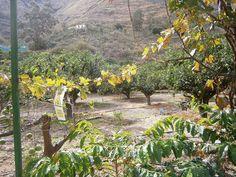 Finca la laja, los Berrazalez, Agaete, Las Palmas, Gran Canaria, España.