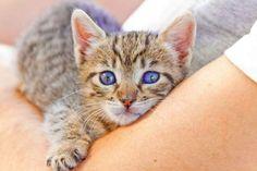 HIROKO - Gato adoptado - AsoKa el Grande