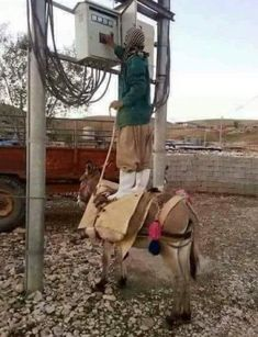 Certified electrician from Pakistan - Funny As Hell, Wtf Funny, Funny Fails, Best Funny Pictures, Funny Photos, Funny Images, Construction Humor, Electrician Humor, Safety Pictures