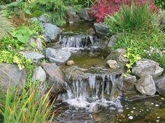 Page Not Found - Arboretum Garden Centre Ltd Yoga Garden, Garden Waterfall, Water Features In The Garden, Koi, Fauna, Ponds, Waterfalls, Land Scape, Beautiful Gardens