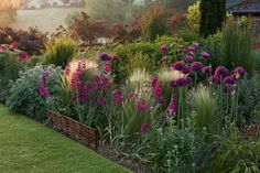 Allium firmament (Ail d'ornement), Stipa tenuissima, Gladiolus communis ssp. Gladioli, Love Garden, Dream Garden, Garden Path, Small Gardens, Outdoor Gardens, Landscape Design, Garden Design, Garden Borders