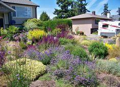 Lavendel und andere Mittelmeer-Sträucher für pflegeleichten Garten