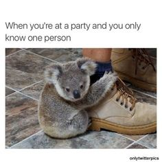 The koala, is Australia's national treasure and a rare and precious primitive arboreal in Australia. The English name Koala bear… Baby Koala, Baby Animals, Funny Animals, Cute Animals, Animal Pictures, Funny Pictures, Funny Relatable Memes, Hilarious Memes, Animal Memes