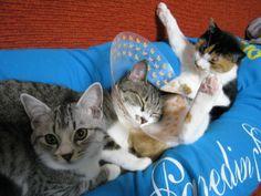 人間の足の間で眠る3匹の猫たち